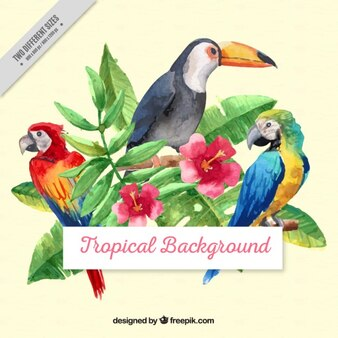 Watercolor tropical birds with leaves background