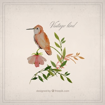 Watercolor vintage bird