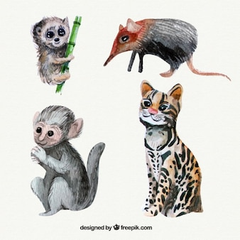 Watercolor wild animals and lovely monkey