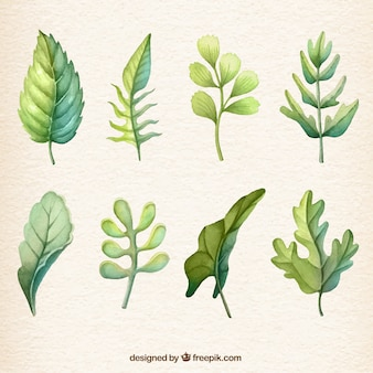 Watercolour leaf collection