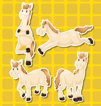 Whie horse in four different positions