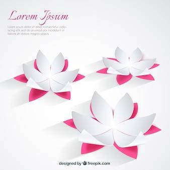 White lotus flowers background