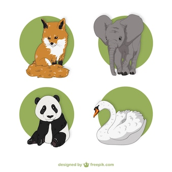 Wild animal illustrations