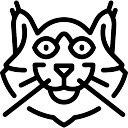 Gatto norvegese delle foreste scaricare foto gratis for Gatto della foresta norvegese