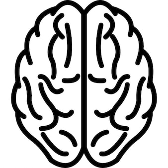 Cérebro superior vista esboço