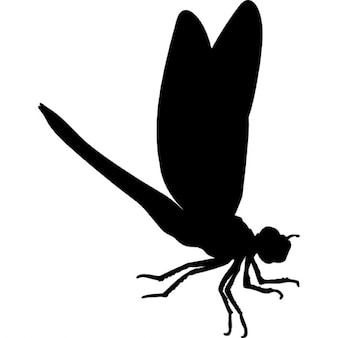Dragon fly forma inseto