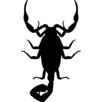 Escorpião forma inseto