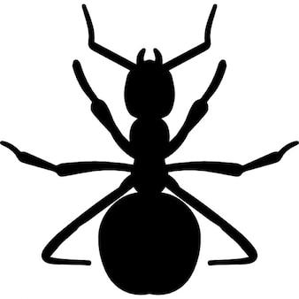 Forma formiga vermelha
