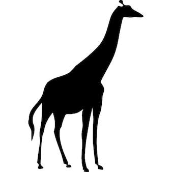 Silhueta girafa