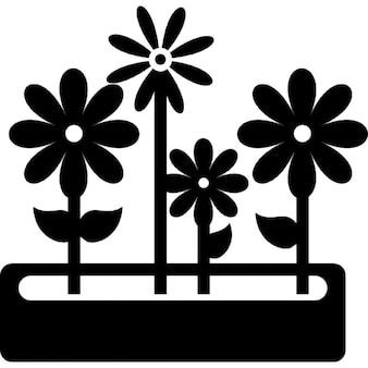 Fleurs pot de cour