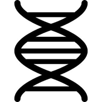 L'acide désoxyribonucléique ADN