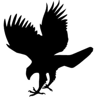Forma animal halcón pájaro