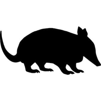 Forma oso hormiguero