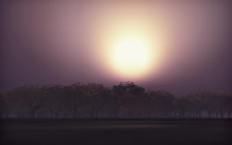 3D rendu d'un paysage d'arbre contre le coucher du soleil ciel