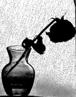pluie de fleurs nature morte effet augmenté de tristesse fin