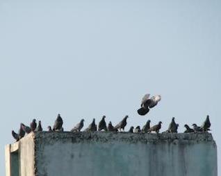 ailes de la liberté