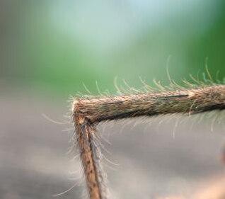 près d'une jambe d'araignée
