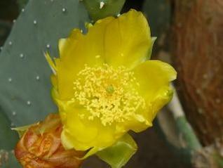 fleur jaune, chaude
