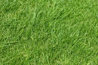 L'herbe, le motif