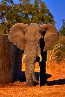 safari d'éléphant abstrait