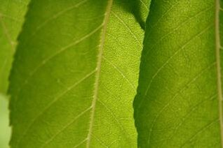 feuilles vertes, feuilles