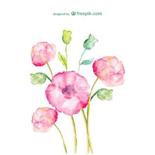 Fleurs d'aquarelle de dessin vectoriel libre