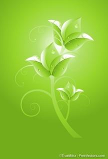 Fleur verte avec des gouttelettes d'eau