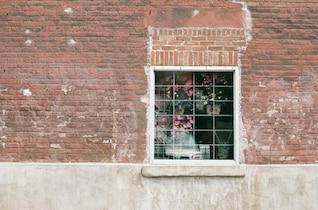 Fleurs throught la fenêtre
