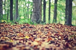 Feuilles d'automne dans le sol
