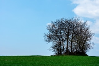 Groupe arbres solitaires
