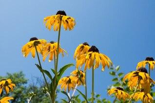 Fleurs jaunes tristes
