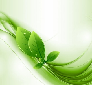 feuilles éco et vecteur d'onde verte