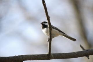 animale petit oiseau minuscule