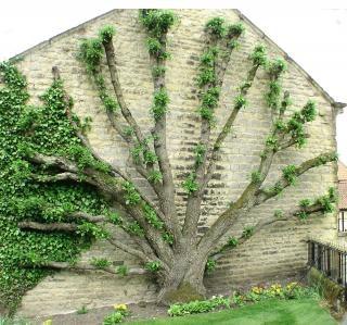 Roots leaves vecteurs et photos gratuites - Arbre a faible racine ...