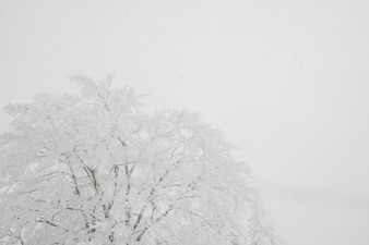 Givre blanc t l charger des photos gratuitement - Jour de l hiver ...