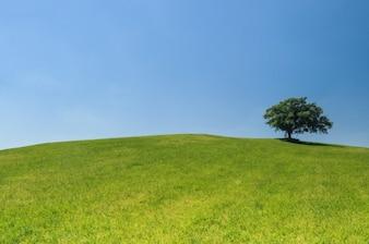 Arbre sur une colline verdoyante