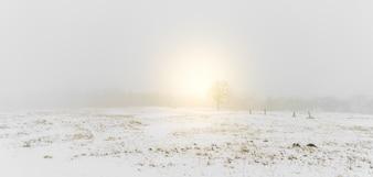 Arbres Paysage d'hiver sur la neige