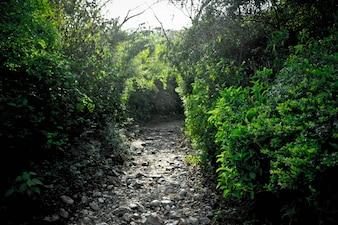 Avant route forêt paysage sentiers