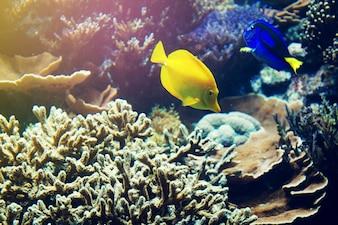 Beau animal de corail de mer rouge. Horizontal avec espace de copie.