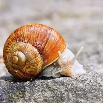 Beau escargot avec coquille dans la nature. Fond naturel coloré avec le soleil.