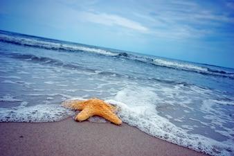 Belle étoile de mer sur le bord de mer