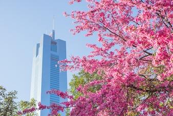 Blooming arbre dans la ville