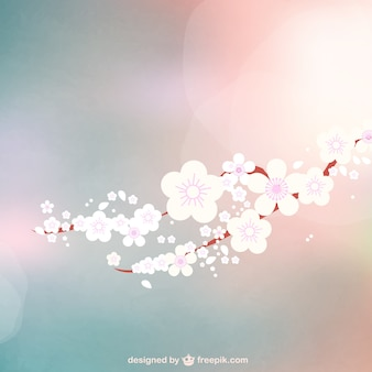 La floraison des fleurs bokeh fond