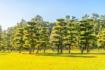 Bonsai vecteurs et photos gratuites for Le jardin imperial marines de cogolin