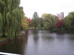 Boston jardins publics arbre