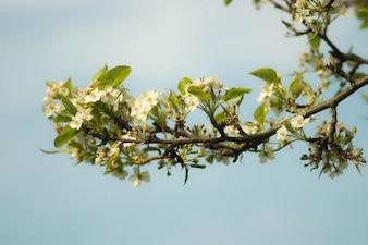 Branche avec de belles fleurs