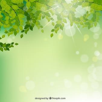 Branches avec des feuilles sur fond vert