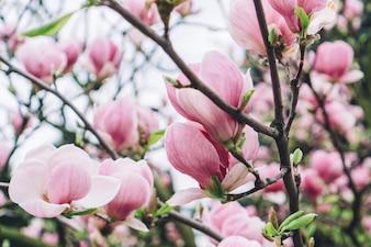 Branches avec des fleurs