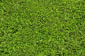 Buisson vert vif