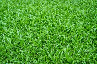 Champ d'herbe à proximité